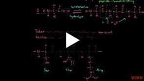 Polymerisatie van aminozuren