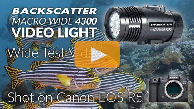Backscatter Macro Wide Video Light MW-4300 | Underwater Wide Angle Test Footage | Maldives