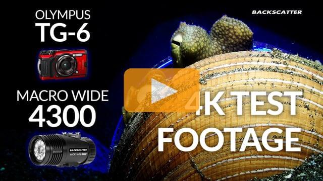Olympus TG-6 & Macro Wide 4300 Video Light | 4K Underwater Demo Video