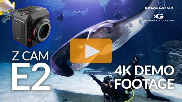 Z Cam E2 Underwater Test Footage | Georgia Aquarium | 4K 30p