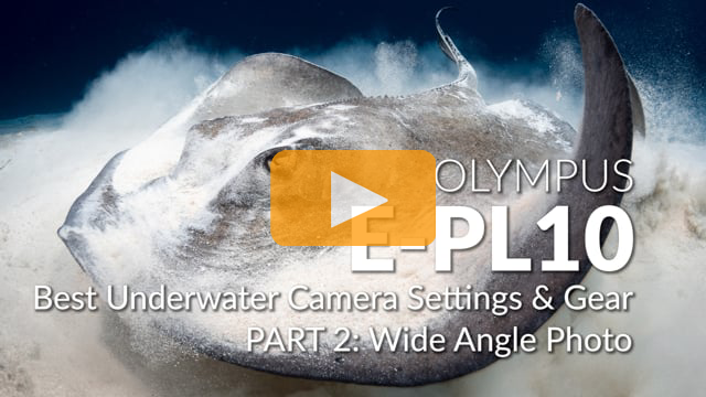 Olympus E-PL10 | Best Underwater Camera Settings | Part 2 - Wide Angle Photo