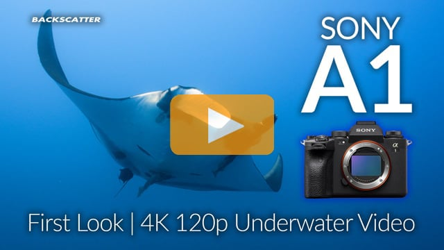 Sony A1 | First Look 4K Underwater Video