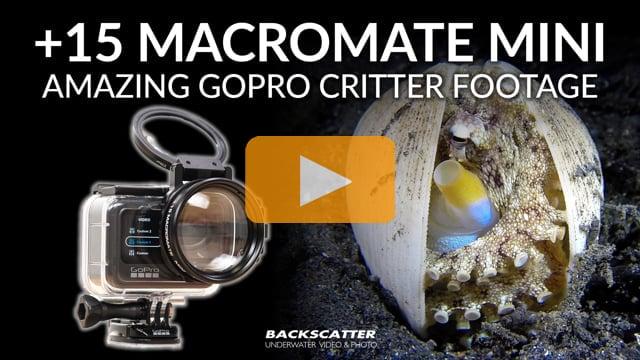 MACROMATE MINI - Get Stunning Macro Video Underwater with your GoPro Camera