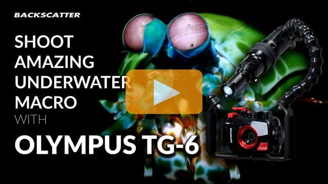 Shoot Amazing Underwater Macro with TG-6