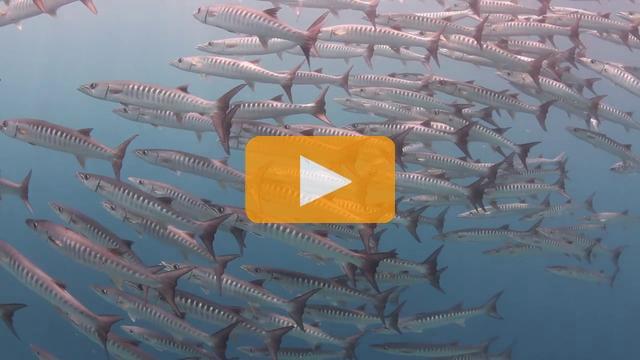 Two Days in Wakatobi - Canon 7D Underwater Video