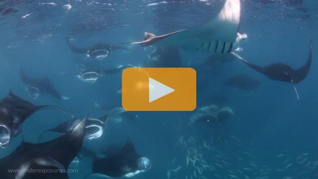 Maldives Manta Bay - Canon 5Dmk II Underwater Video