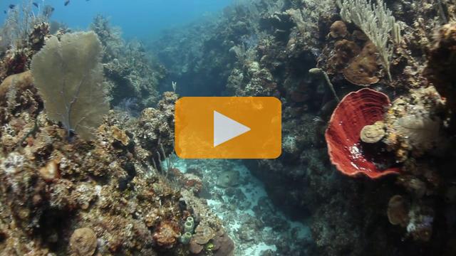 DiveX POV Scooter in Little Cayman - Canon 5Dmk II Underwater Video