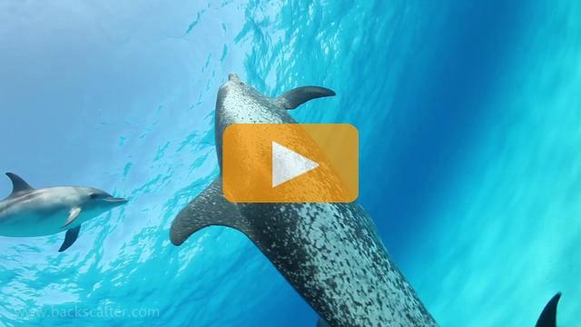 Bahamas Dolphins - Canon 5Dmk II Underwater Video
