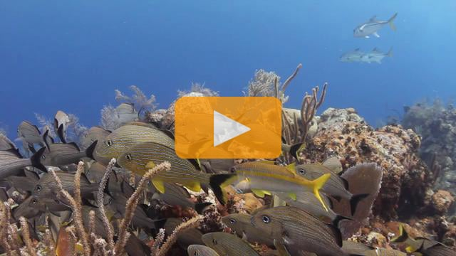 Test Footage at the Digital Shootout - Canon 5d mk II and Canon T2i Underwater Video