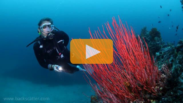 Lembeh - Canon 5Dmk II Underwater Video