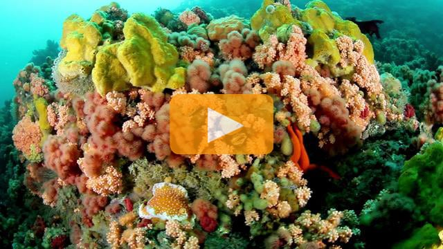Alaska - Canon 5D Mark II Underwater Video
