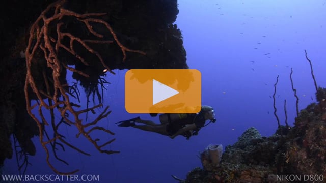 Nikon D800 Underwater Video - Little Cayman