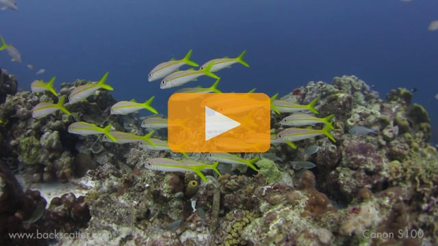 Backscatter Best Underwater Compact Cameras 2012--Canon S100