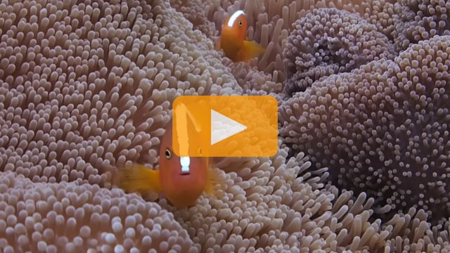 Backscatter Best Underwater Compact Cameras 2012 - Olympus Tough TG-1