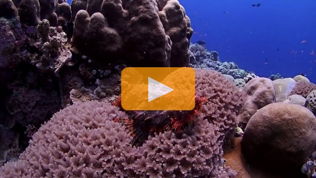 Backscatter Best Underwater Compact Cameras 2013 - Olympus Tough TG-2