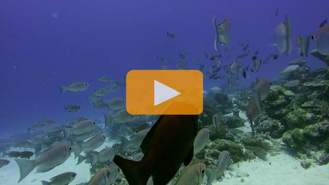 Backscatter Best Underwater Compact Cameras 2013 - Olympus PEN E-PL5