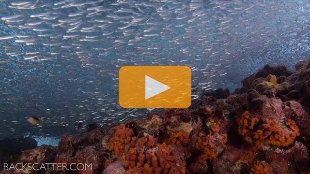 Panasonic Lumix GH3 Underwater Video Test