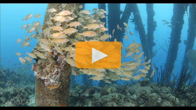 Canon 1DC Underwater Video by Joel Penner