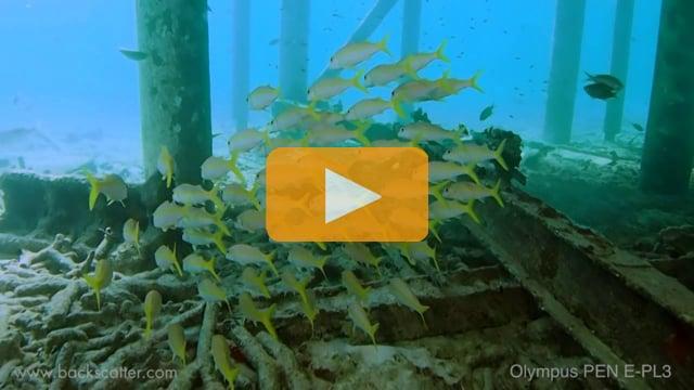 Backscatter Best Underwater Compact Cameras 2012 - Olympus PEN E-PL3