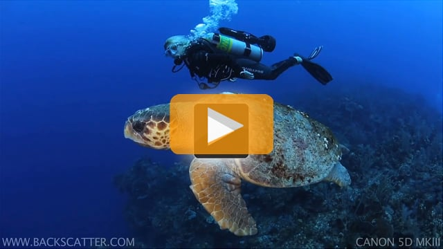 Canon 5D Mark III Underwater Video - Little Cayman