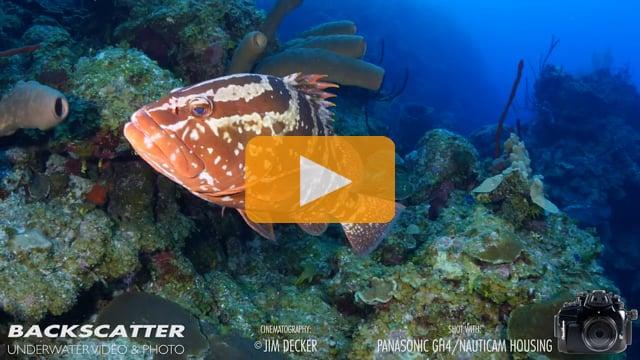 Panasonic GH4 Underwater Camera Test - Little Cayman