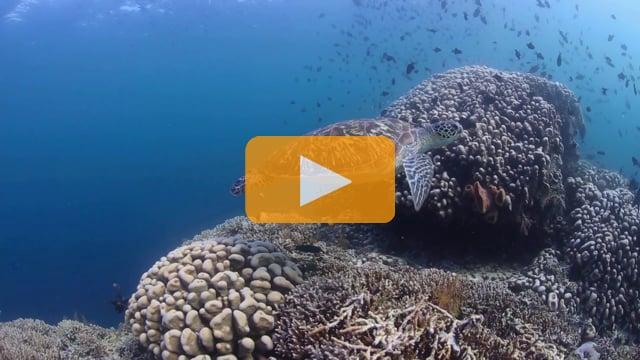 Wakatobi 2014 - Backscatter Group Slideshow