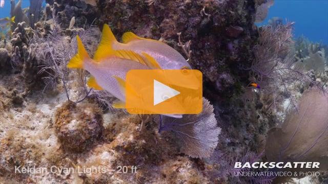 Keldan Cyan Lights Underwater Light Review - 2015