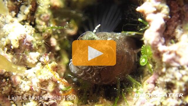 Sola Lights Underwater Light Review - 2015