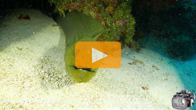4K Underwater Camera Review of the Panasonic LX100 - JimDecker