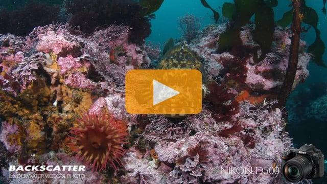 Nikon D500 First Underwater Test Footage