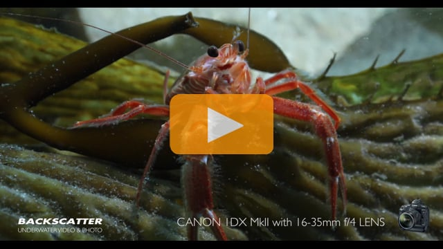 Canon 1DX Mark II Camera First Dives Underwater