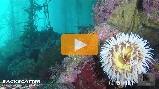GoPro Hero 5 Black - Underwater Test Footage