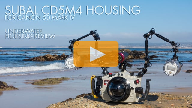 Subal Canon 5D Mark IV Underwater Housing Review