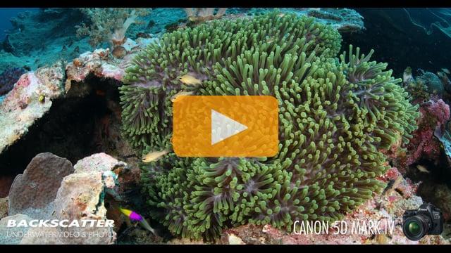 Canon 5D Mark IV Underwater Camera Test - Wakatobi