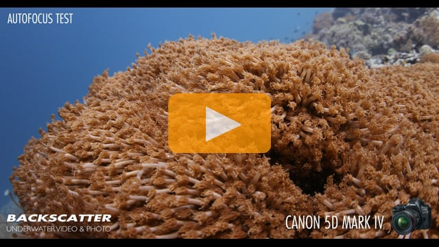 Backscatter Tests the Canon 5D Mark IV's Focus Shifting Underwater