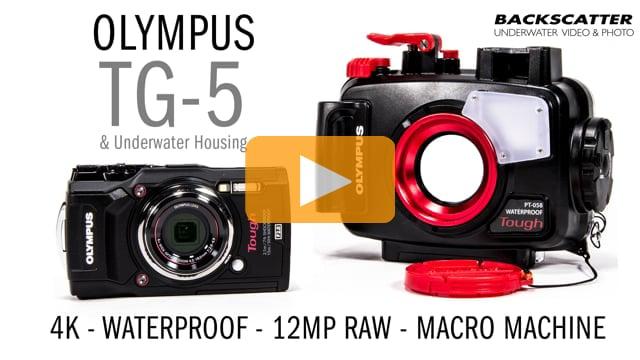 Olympus TG-5 Underwater Camera & Housing - First Look