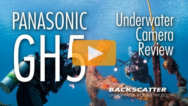 Panasonic GH5 - Underwater Camera Review