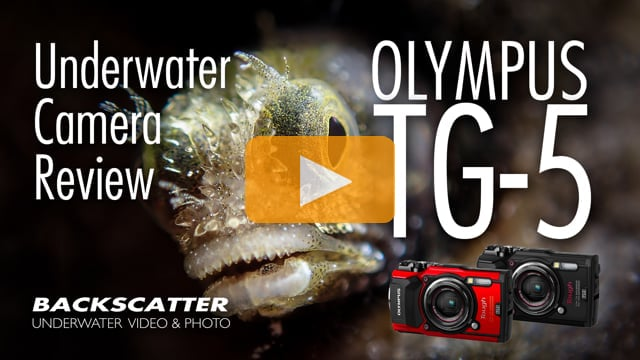 Olympus TG-5 Underwater Camera Review