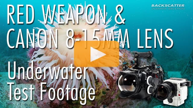 RED Weapon 8K with Canon 8-15mm Fisheye Lens - Underwater Test Footage