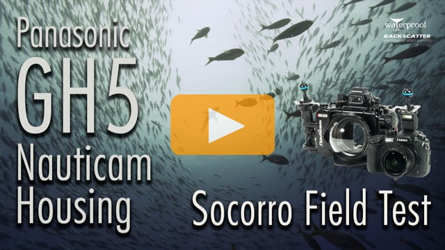 Panasonic GH5 & Nauticam Housing - Underwater Camera Review by Adil Schindler for Backscatter