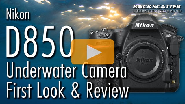 Nikon D850 Underwater Camera Review and First Look