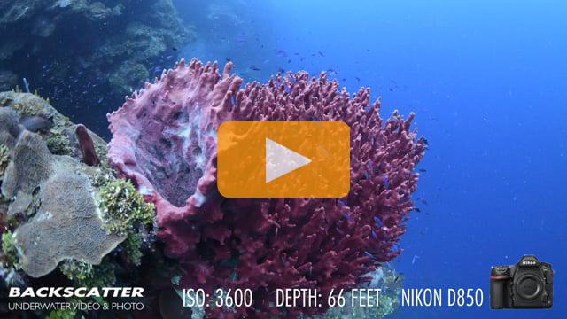 Nikon D850 Underwater White Balance Test