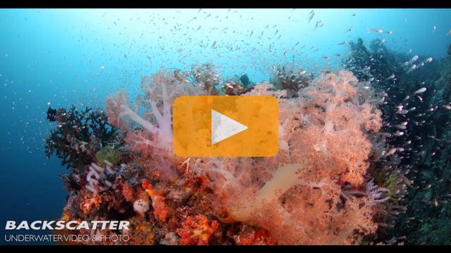 1DC Underwater 4K Footage - by Joel Penner