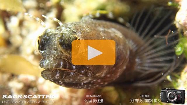 Amazing Macro - Olympus Tough TG-3 Underwater Camera Test