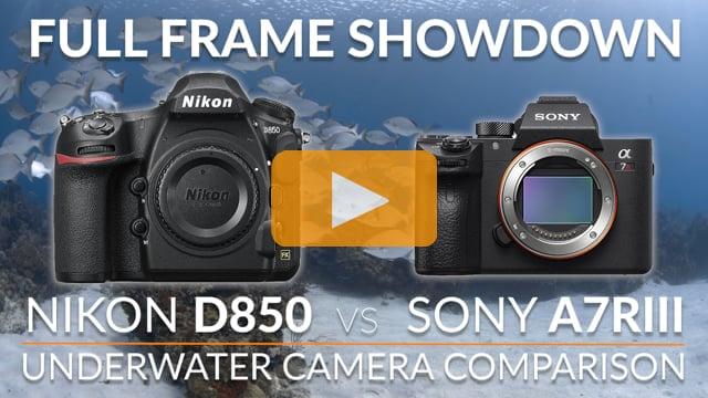 Nikon D850 vs Sony a7R III Underwater Camera Comparison - Full Frame Showdown
