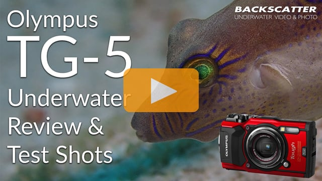 Olympus TG-5 Underwater Review 2018 - Test Shots
