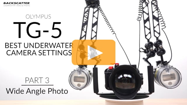Part 3: Wide Angle Photo - Olympus TG-5 Best Camera Settings for Underwater Photography