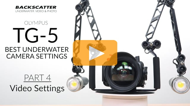 Part 4: Video Settings - Olympus TG-5 Best Camera Settings for Underwater Photography