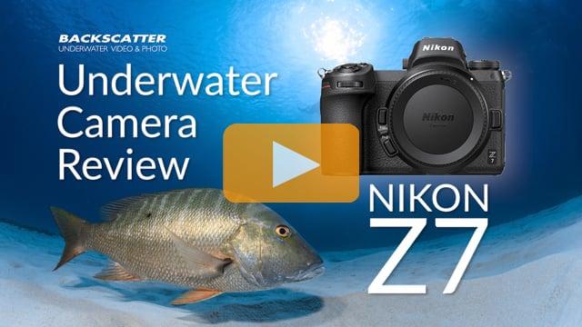Nikon Z7 Underwater Camera Review