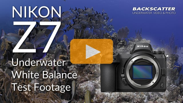 Nikon Z7 Underwater White Balance Test Footage